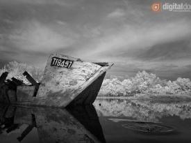 Black & White Infrared : 09