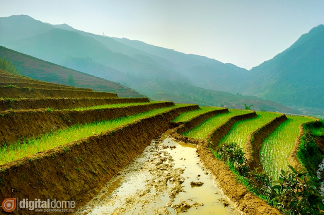 Rice terrace of Sapa