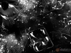 Black & White Infrared : 03