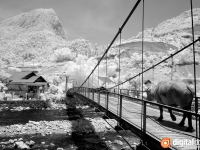 Black & White Infrared : 20