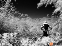 Black & White Infrared : 19