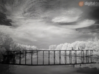 Black & White Infrared : 21