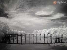 Black & White Infrared : 21