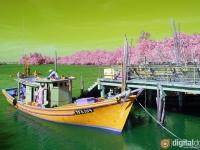 False Color Photography – Beautiful Terengganu 1