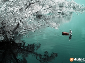 Color Infrared – 09